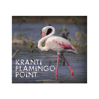 kranti-flamingo-point